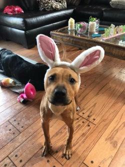 Roxi Easter