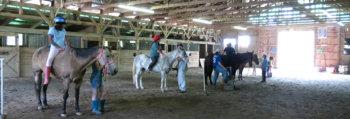 In-Stride-MakingHay-Horses